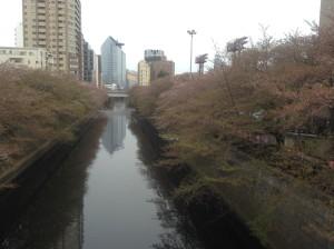 桜4・12①