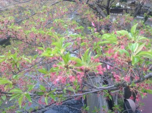 ④桜4.12④